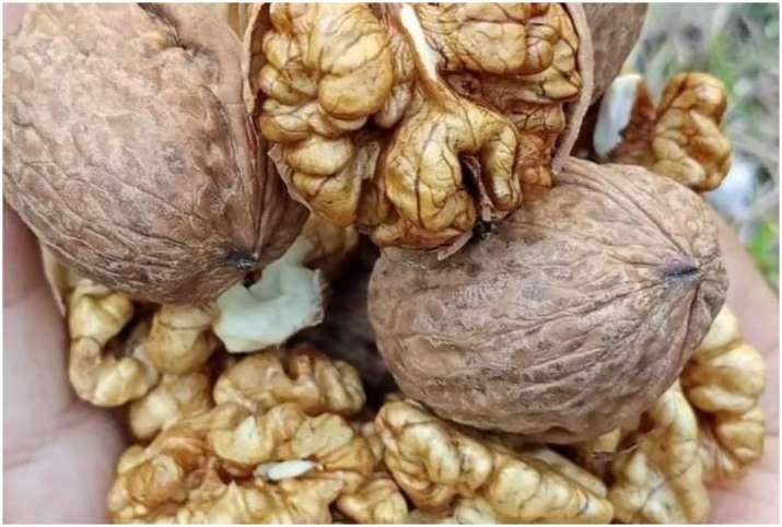 Akhrot or Walnut