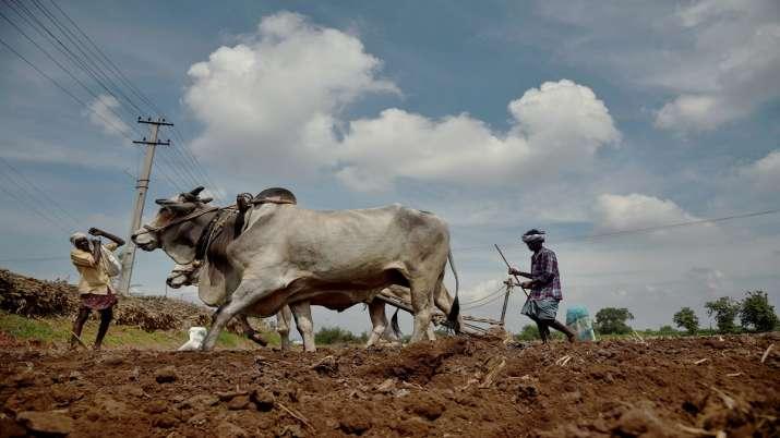 यूपी के करोड़ों किसानों की समृद्धि का आधार बनेगी जैविक खेती, सरकार देगी अनुदान, ये रही पूरी जानकारी