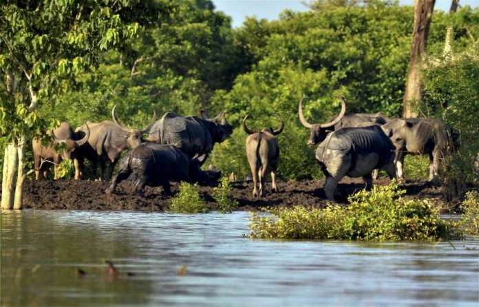 96 animals died at Kaziranga National Park and Tiger Reserve Bokahat in the flood- India TV Hindi