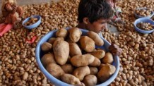 Potato price set to ease below Rs 40 in a few days