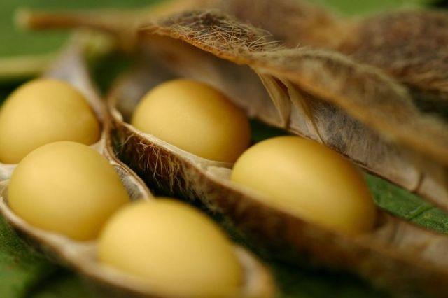 Plantaciones de soja Brasil