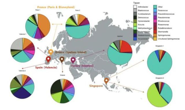 Perfiles taxonómicos de las muestras de chicles recogidos del suelo de cinco países diferentes