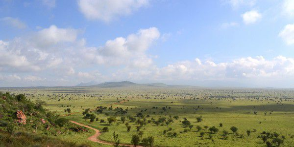 Resultado de imagem para green sahara