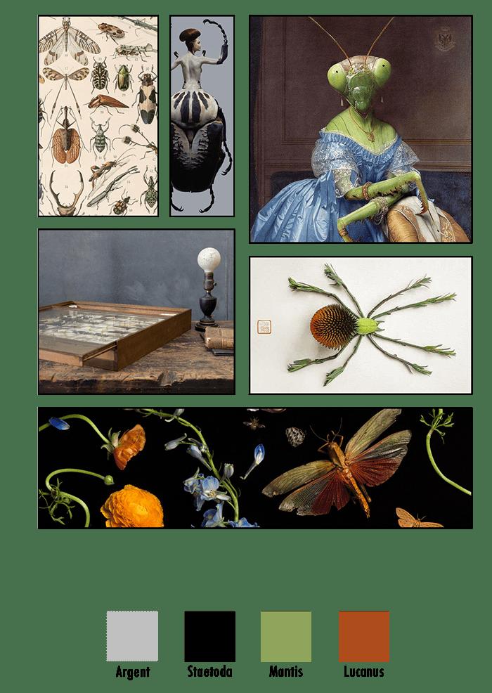 Planche d'ambiance de la ligne Entomologie imaginée à partir des collections d'insectes; abeilles, scarabées, papillons, criquets, mante religieuse...