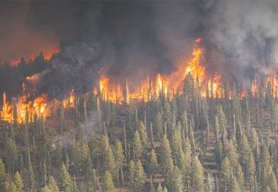 What to Do After Wildfires