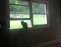 Watched the cat watch the deer in the backyard from the couch
