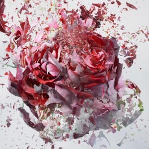 Martin-Klimas, photography, exploding-flower