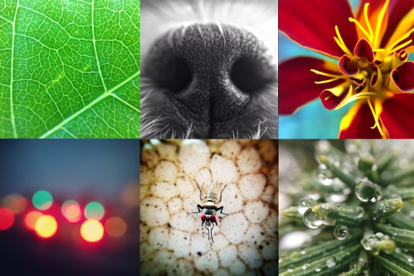 iphone-lens-series, android-lens-series, photojojo, wish-list, gifts-for-photographers