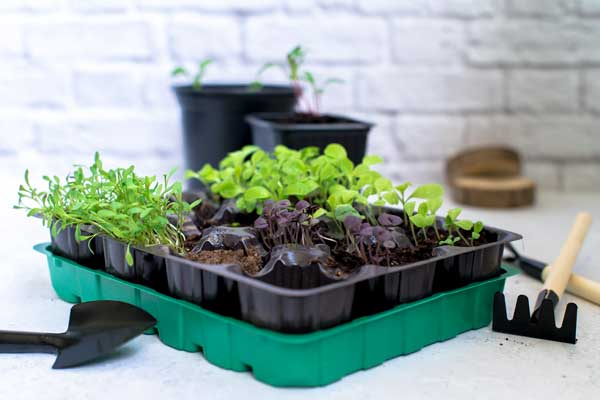start an indoor herb garden