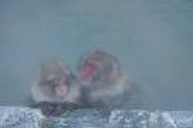 s_monkey onsen 160816a