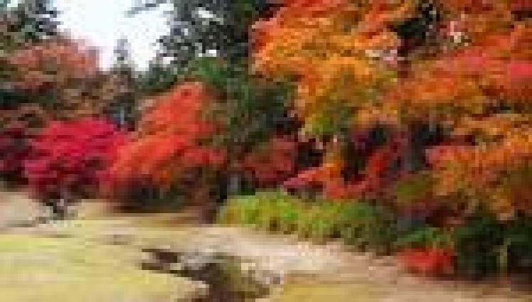 Tohoku Koyo photo10