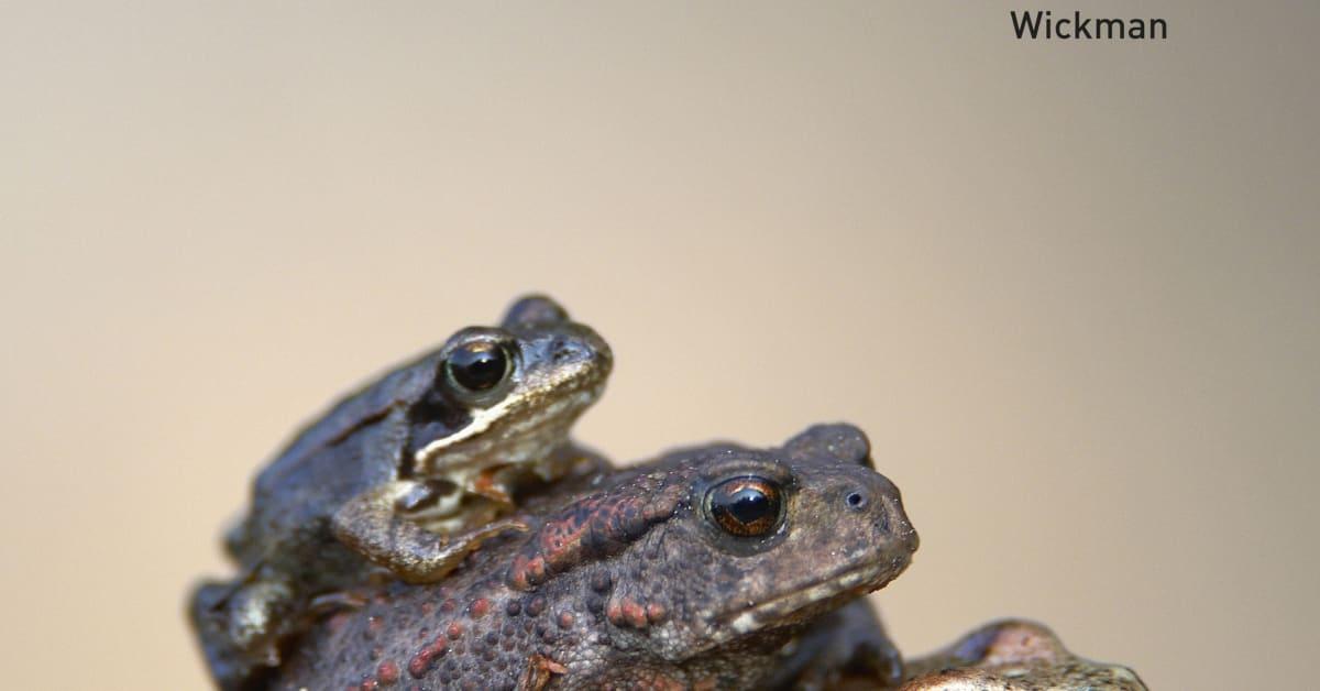 Ekologi termasuk dalam cabang ilmu biologi yang mempelajari makhluk hidup dan lingkungannya. Biologi 1 - Liber AB