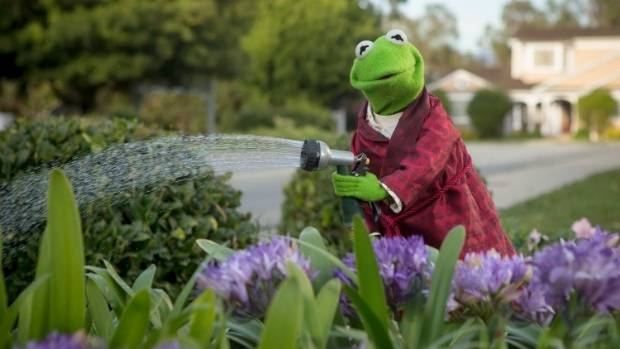 Property Lessons From Kermit The Frog Nz