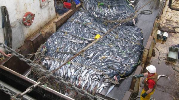 Hoki quota trimmed by 'precautionary' 10,000 tonnes ...