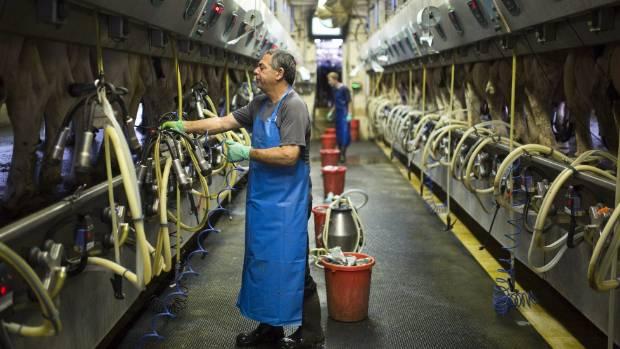 Herd manager Udi Stainbaum works at a dairy farm in Kibbutz Yad Mordechai, southern Israel. Israeli dairy farmers ...
