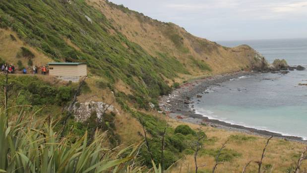 The Nuggets Rd yellow-eyed penguin viewing area in the Catlins.