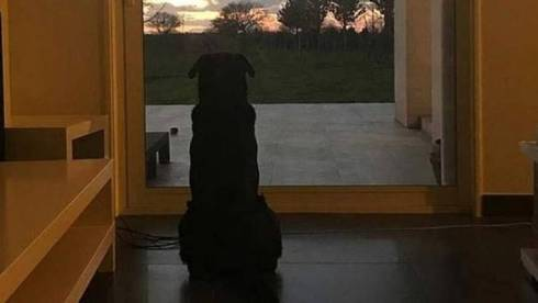 Image result for emiliano sala dog