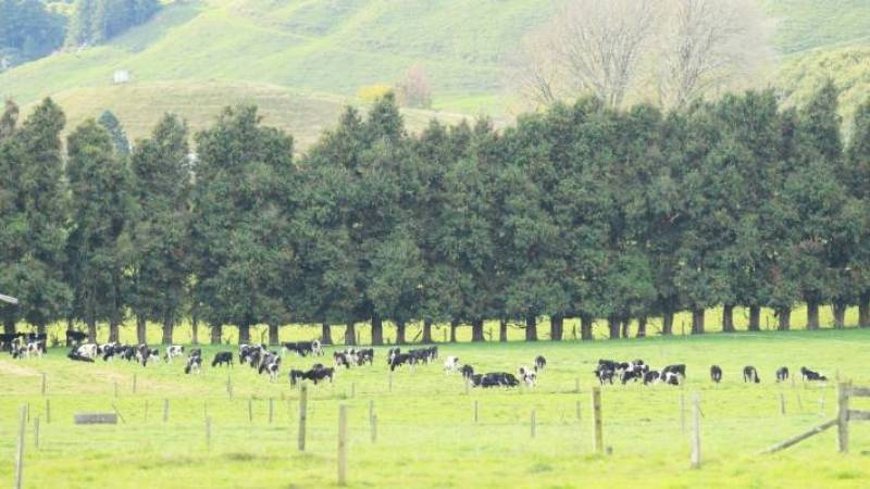 Olam is meeting with South Waikato farmers to discuss development of a new milk processing facility in Tokoroa.