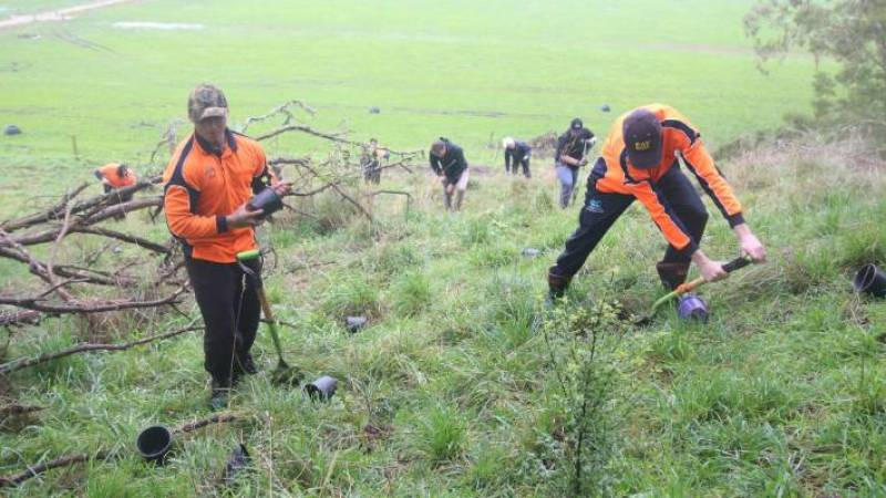 Staff from the Ngāti Hauā Mahi Trust, Jimmy-Rei James and Scott Vercoe, leading the planting effort up the hill.