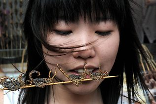 Girl eating insects