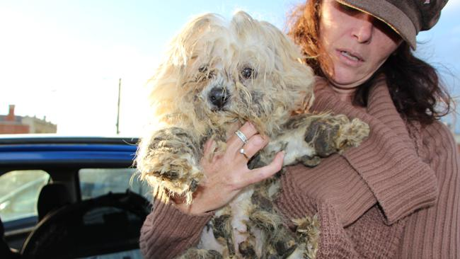 Puppies are forced to live in squalid conditions. Photo: CLEO Magazine