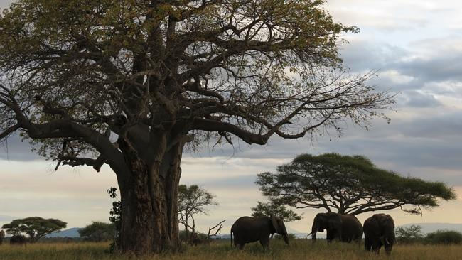 Eye-to-eye with a slice of Africa