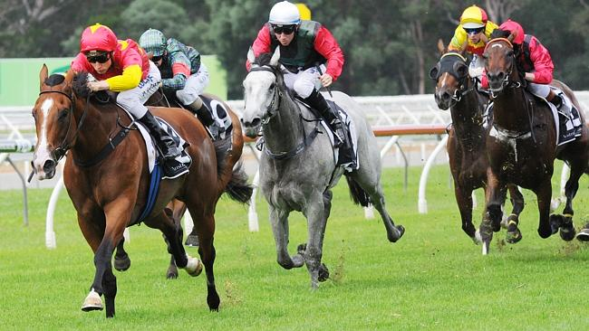 First Seal will step up to 2000m in the Vinery Stud Stakes at Rosehill on Saturday. Pictu
