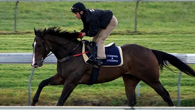 High Midnight is on a path towards the Queensland Derby. Picture: Loren Wadsworth