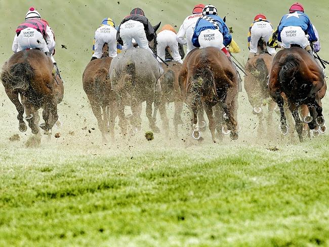 The racing industry across the land has taken a huge hit from the cobalt fallout this yea