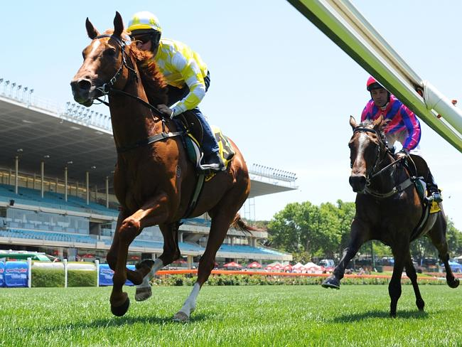 Criterion gallops with stable mate Purple Music in between races at Moonee Valley last No