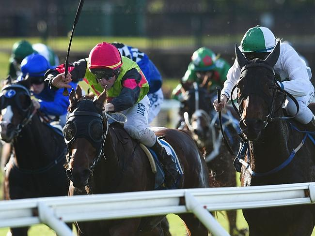 Some trainers have criticised the ATA for inaction over the cobalt saga. Picture: Getty I