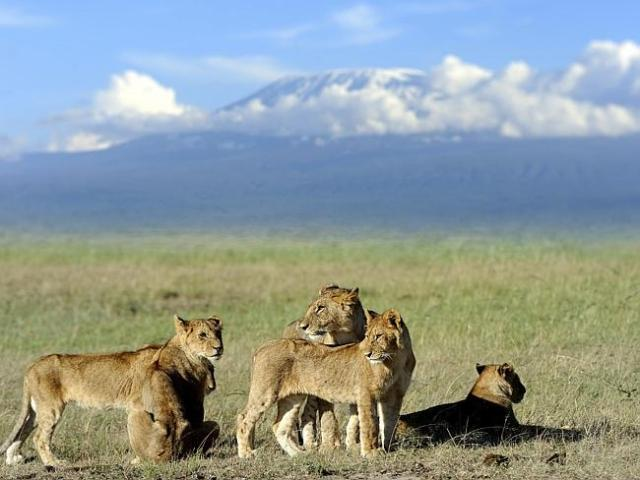 Mount Kilimanjaro in the background is facing ice and snow melt. Picture: iStock
