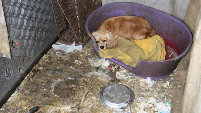 This Adelaide Hills property was raided in June. 100 dogs were rescued. Photo: CLEO Magazine