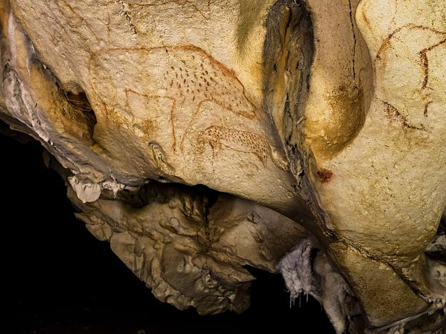 Animal paintings found on the cave walls.