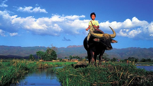 A boy riding a buffalo on Inle Lake. Picture: Bernard Napthine, Lonely Planet