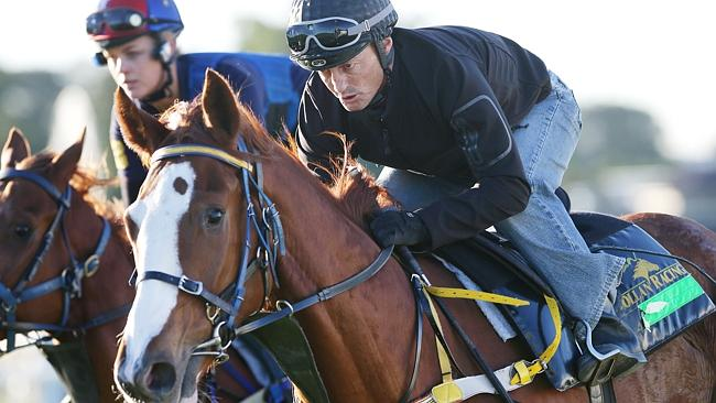 Looks Like The Cat has matured according to trainer Tony Gollan and his primary Melbourne