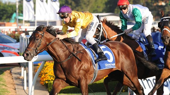 Trainer Gai Waterhouse is keen to run Pornichet in the Toowoomba Cup. Picture: Simon Bull