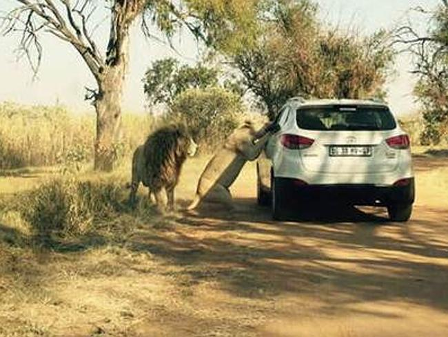 Disturbing: The photo that captures the moment before fatal attack. Picture: featureworld