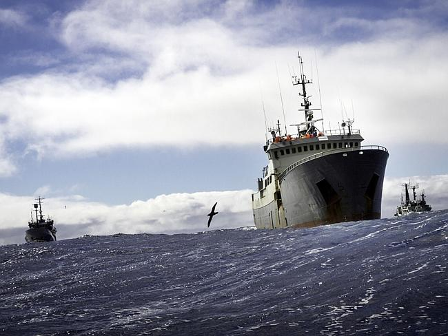 Interpol wanted poaching vessel Thunder shadowed by Sea Shepherd ships Bob Barker and Sam