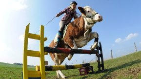 Regina Meyer and Luna the Cow show off their jumping skills