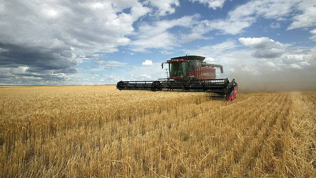 https://i1.wp.com/resources3.news.com.au/images/2011/07/11/1226092/641887-wheat.jpg