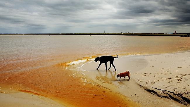 A bright orange plume has been found in Botany Bay. Picture: Brett Costello
