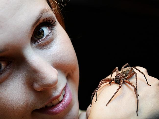 Wild Life Sydney Zoo Invertibrate keeper Olga Kazakova with a huntsman. Picture: Braden F