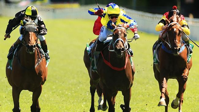 Amovatio, centre, is among Chris Waller's strong team at Rosehill. Picture: Mark Evans