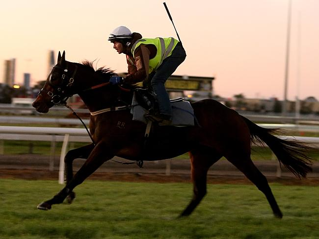 Boban works on the Gold Coast on Tuesday morning: Picture: Mike Batterham