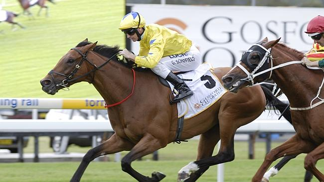 Midsummer Sun in action at the 2014 Gosford Quarries Gosford Gold Cup. .