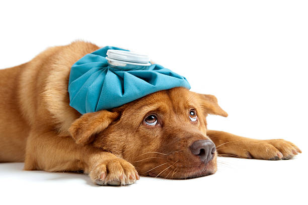 what medical care do dogs need
