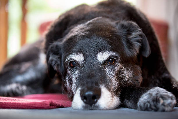 how to make your older dog comfortable