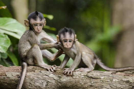 Come to Monkey Forest Road for Resource Therapy Professional Psychology Workshops