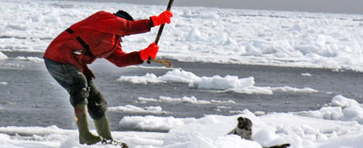 Save The Seals- Canada 2017